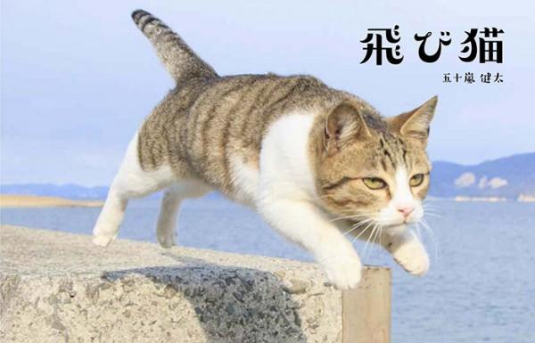 sirabee_tobineko_yakisobakaoru_201502172100 (5)
