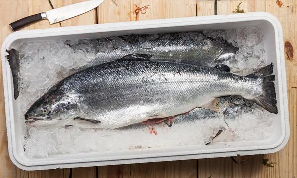 whole salmons lying on ice