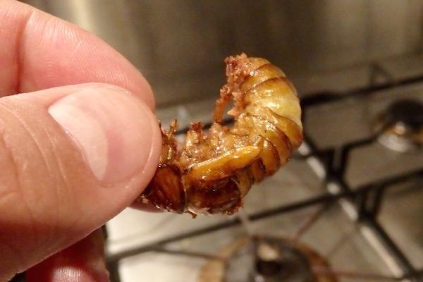 【昆虫グルメ】もっともおいしい虫のひとつ「セミの幼虫」を ...