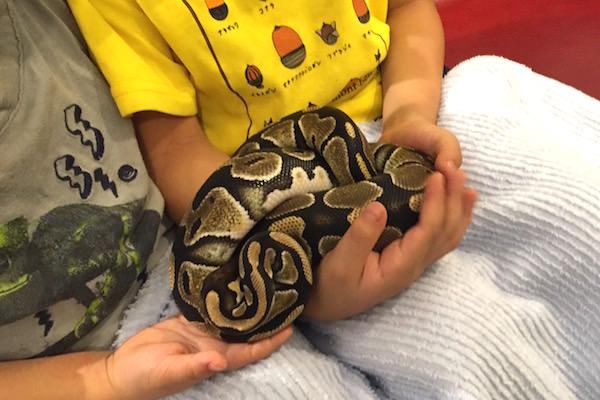 蛇カフェ2
