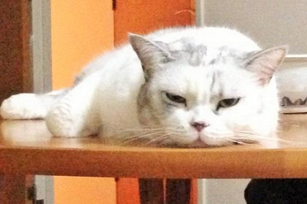 猫カフェ_11