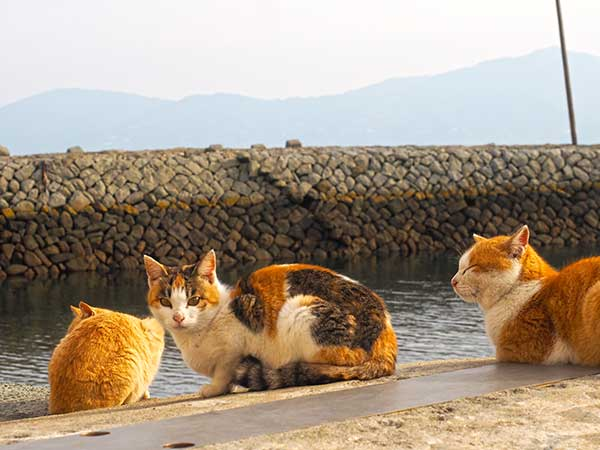 青島のネコ