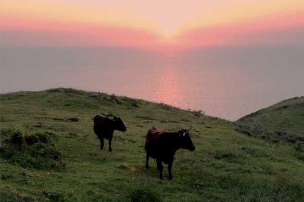 隠岐諸島「西ノ島」赤尾付近の様子