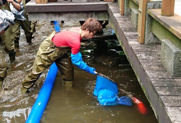 緊急 SOS!池の水ぜんぶ抜く大作戦
