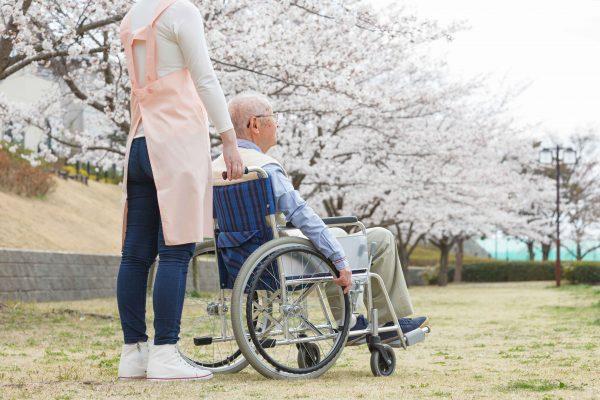 高齢者と桜