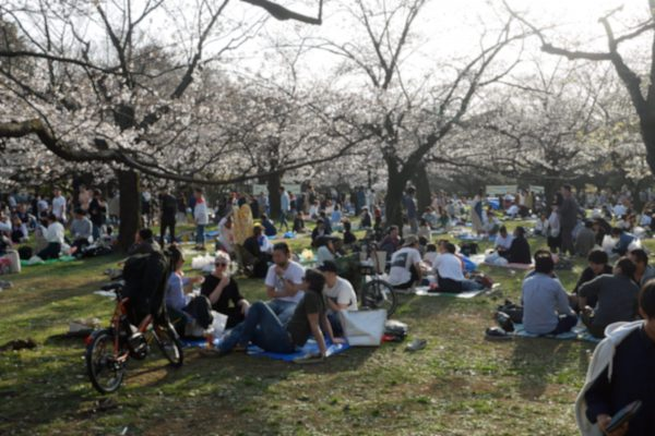 代々木公園・花見