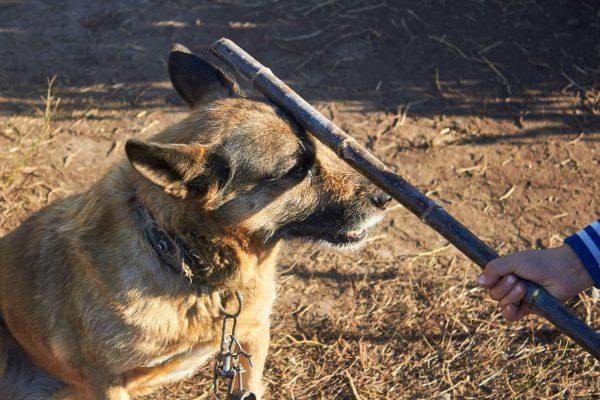 犬・動物虐待