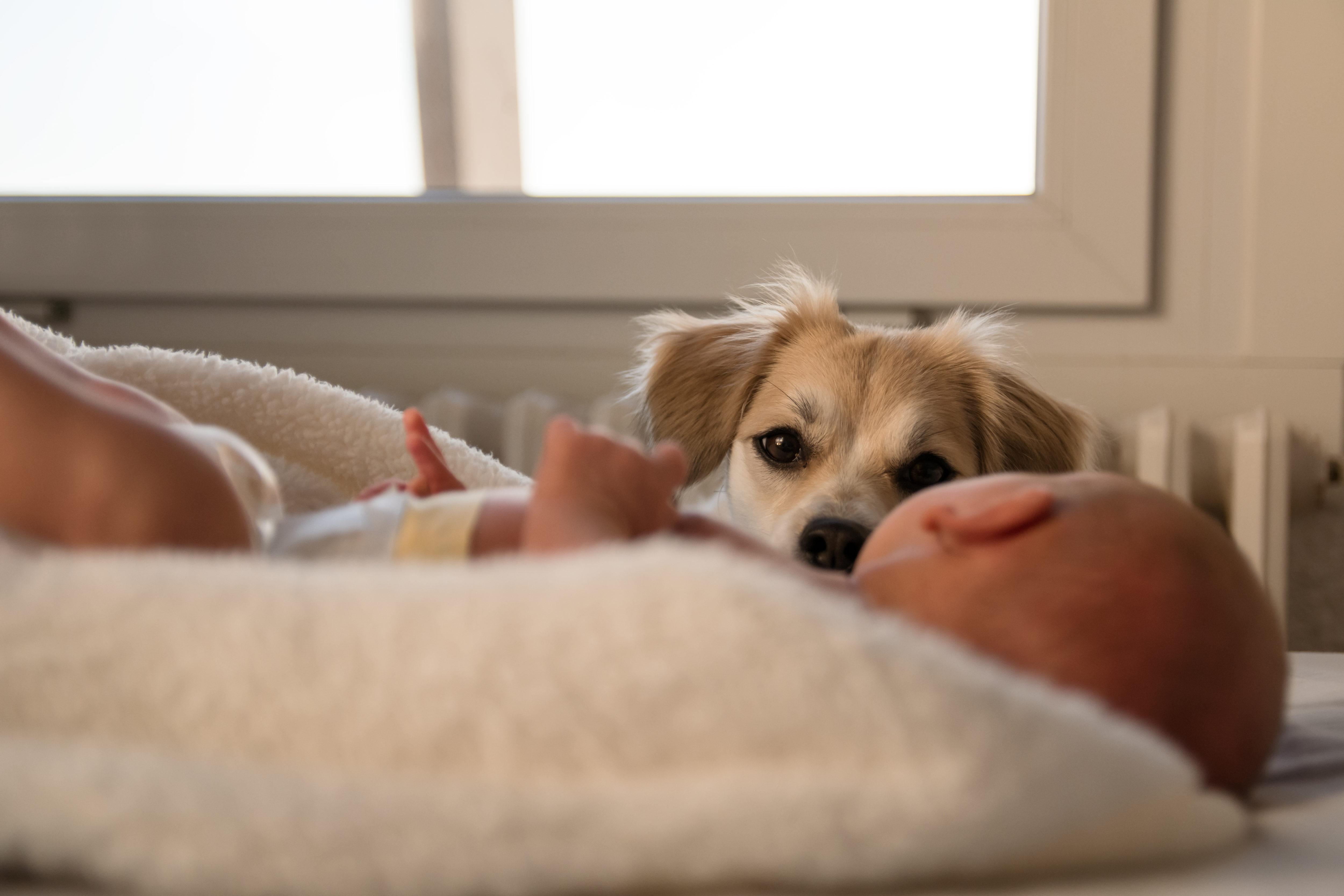 犬と新生児
