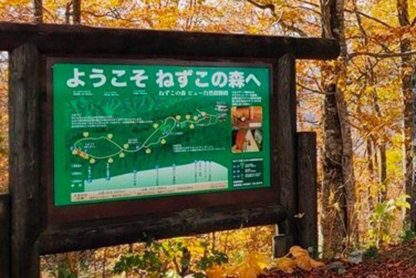 長野県・ねずこの森が「鬼滅の聖地」と話題 公式もやはりノリノリだった