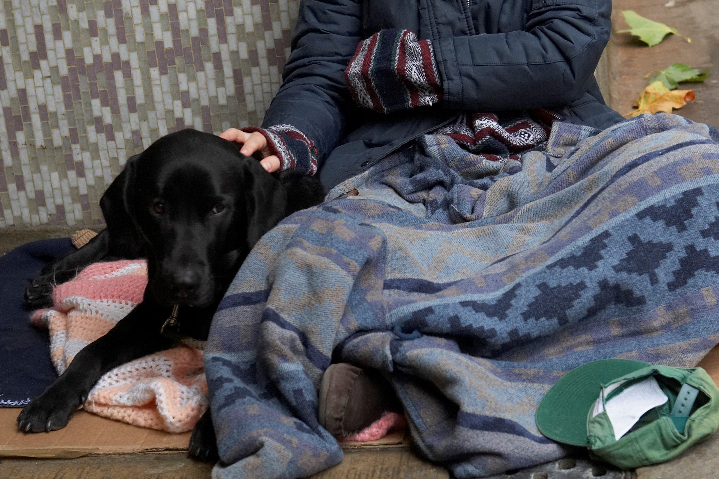 ホームレス・犬