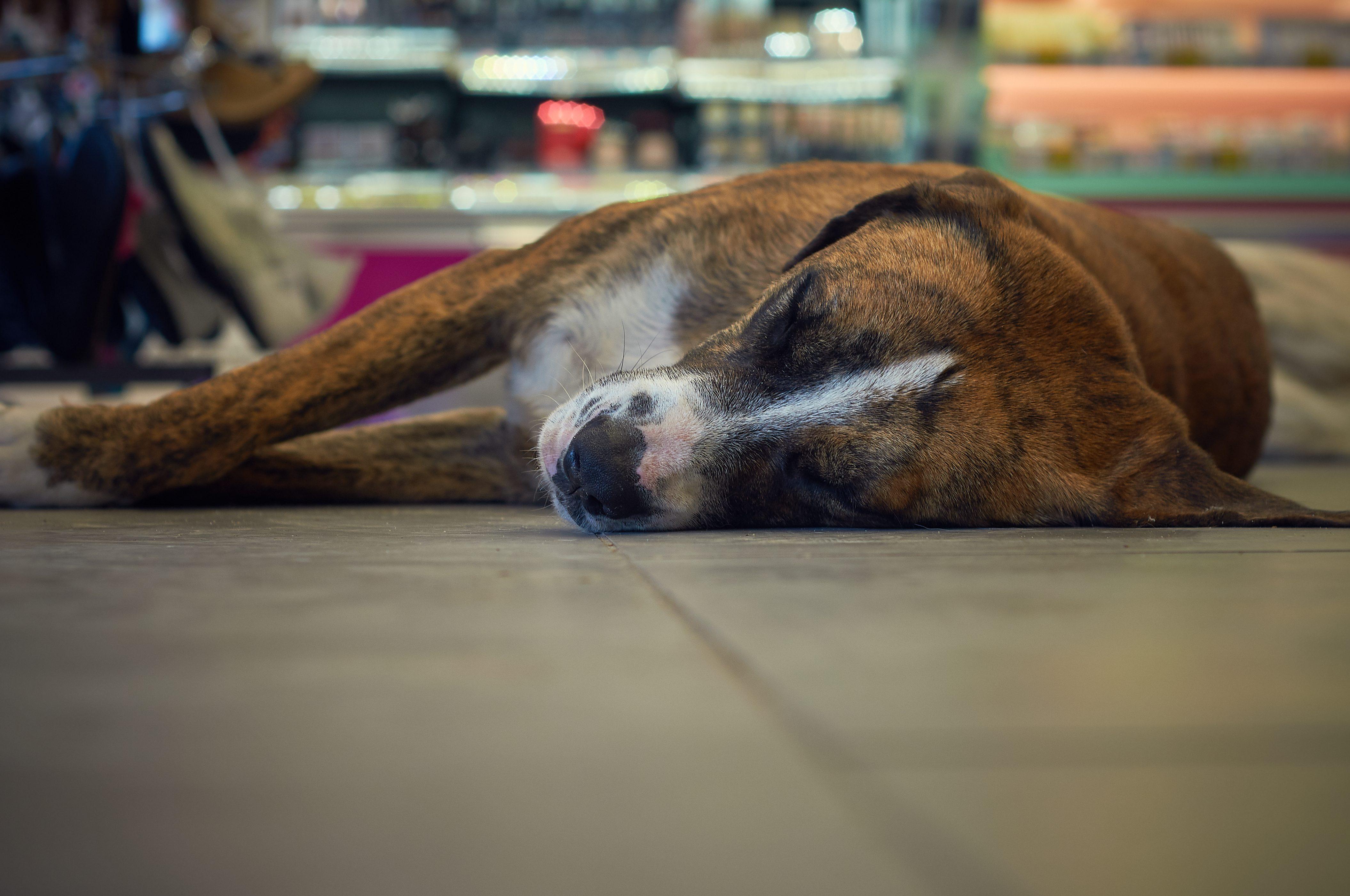 犬・店・寝る