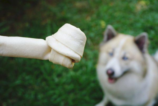 犬・骨・おやつ