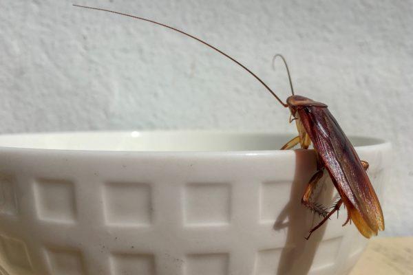 ゴキブリ・レストラン