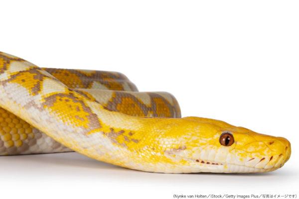 逃走アミメニシキヘビをアパート屋根裏で発見 消防は「生きたまま容器に入れて捕獲」