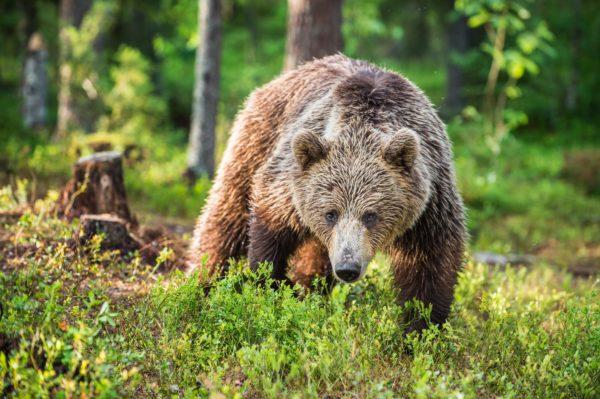 熊・クマ・森