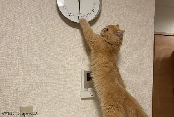 時計をずらす猫
