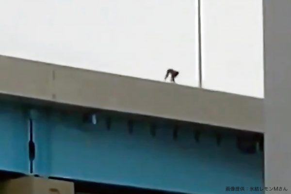 高速道路・ニホンザル