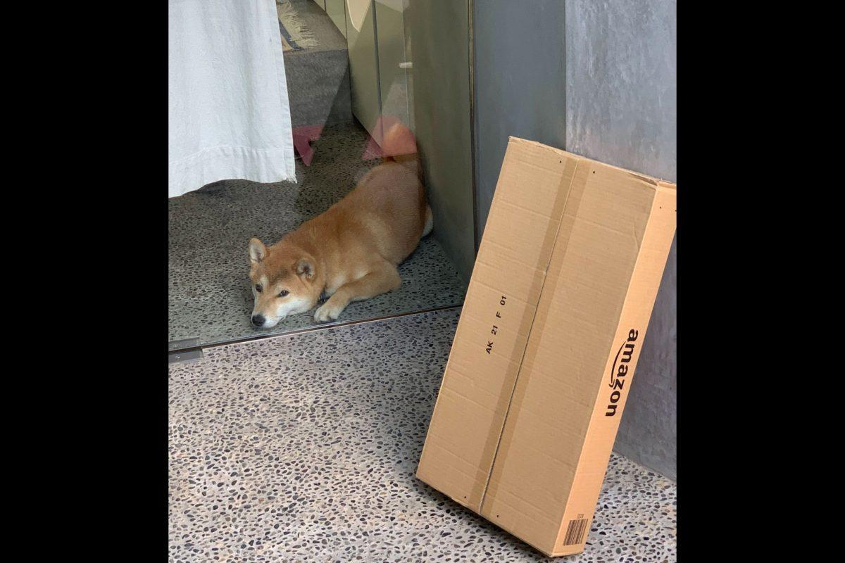 Amazon犬