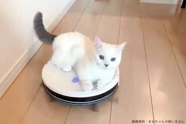 ロボット掃除機に乗ってご飯を食べようとする猫 戸惑う姿が「可愛い」と大反響