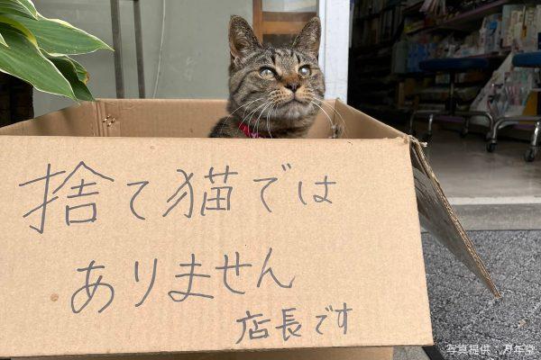 「捨て猫ではありません」 文具店のかわいすぎるにゃんこ店長が大人気