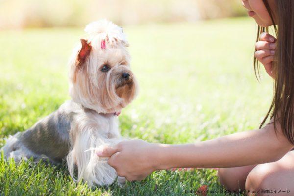 ヨークシャーテリア・少女・愛犬・飼い主
