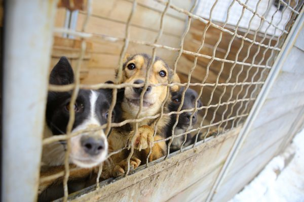 動物保護施設・犬