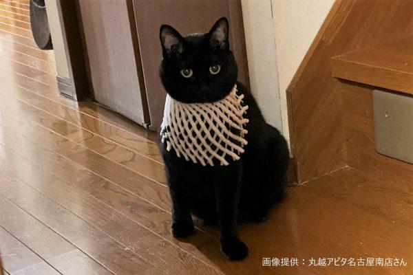 バステト 猫