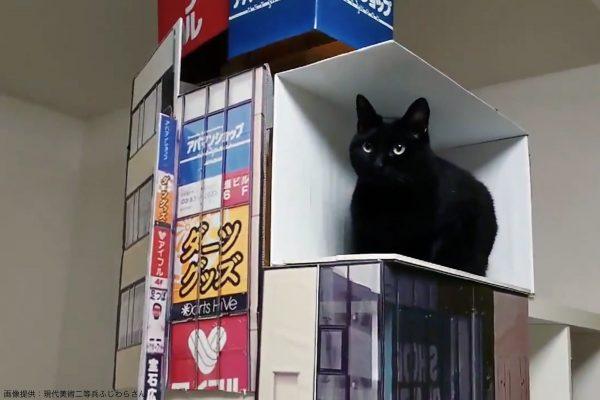 新宿3Dリアル猫