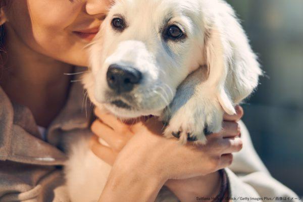 飼い主・ペット・犬・愛犬