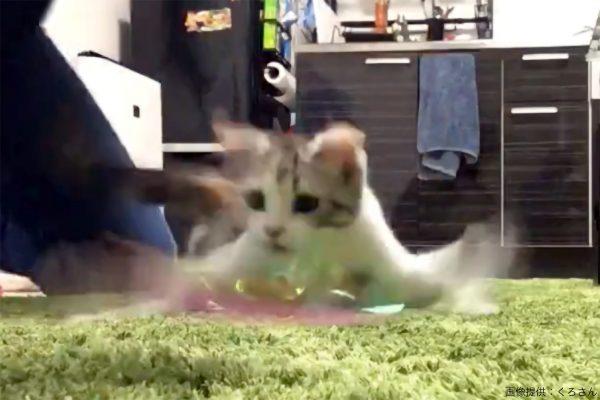 猫じゃらしで遊ぶ子猫 モンハンのティガレックス思わせる特徴的な動きが話題に