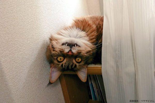 仕事中、愛猫に異変が…? その風貌が完全にレペゼン「不思議の国」と話題に