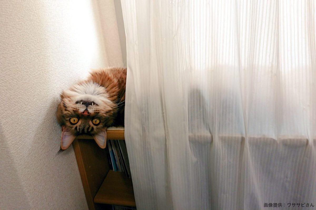 チェシャ猫のような猫