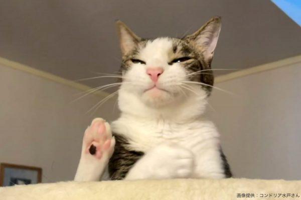 ボウルに入った猫