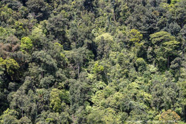 ジャングル・熱帯雨林