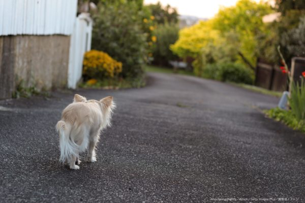 犬・脱走・迷子