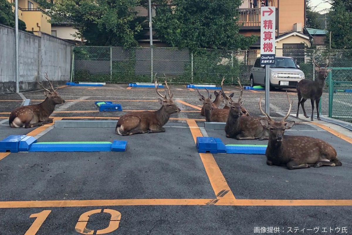 奈良の駐車場